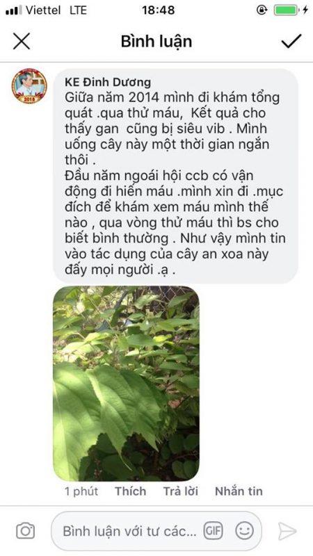Nhiều khách hàng phản hồi tốt khi dùng cây an xoa chữa bệnh Gan