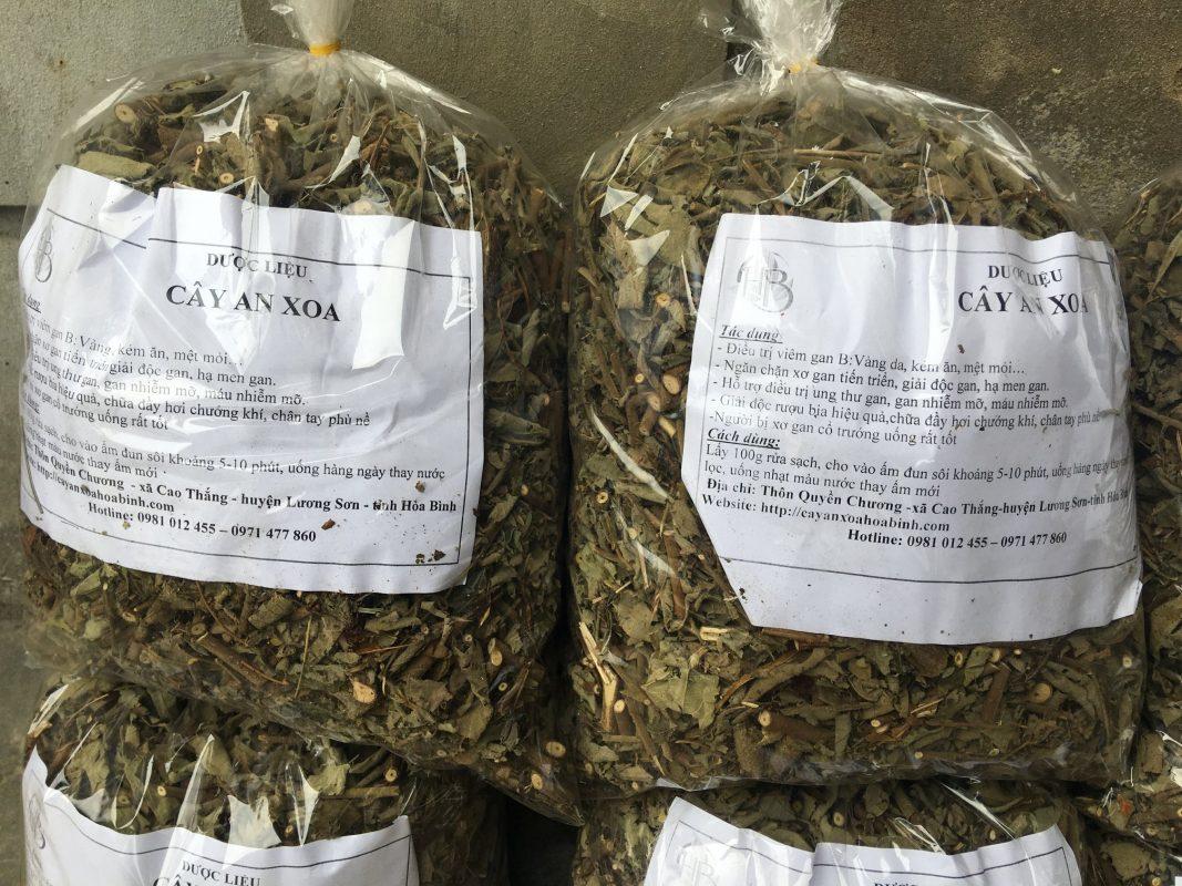 Phân phối sỉ lẻ cây an xoa tại Hưng Yên