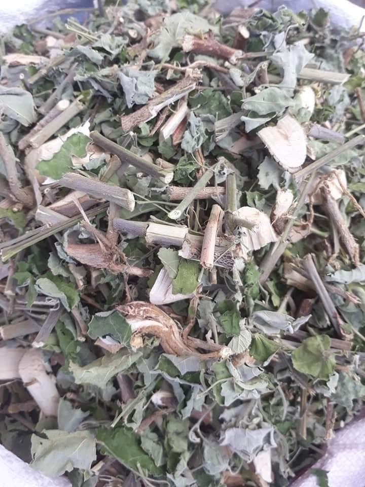 Mua bán cây an xoa giá rẻ giá buôn tại Bạc Liêu view 2