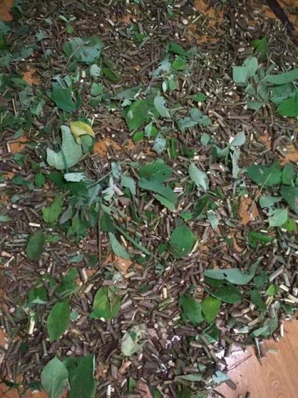 Mua bán cây an xoa tại Hà Giang