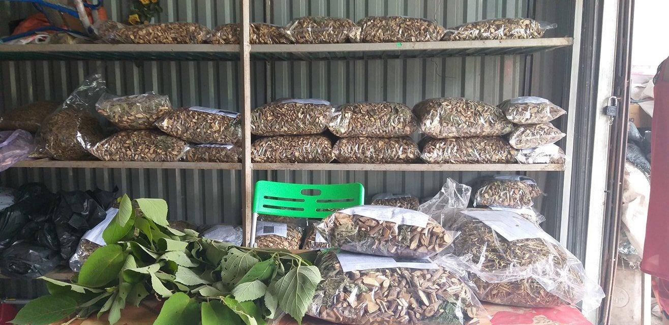 Địa chỉ mua bán cây an xoa tại Cao Bằng