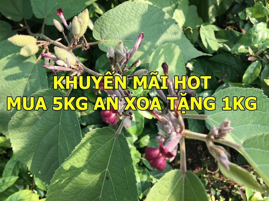 Khuyến mãi: Mua 5kg cây an xoa tặng 1kg dịp tết Nguyên Đán 2020