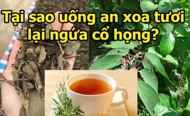 Vì sao uống cây an xoa tươi lại thấy ngứa cổ họng? 2